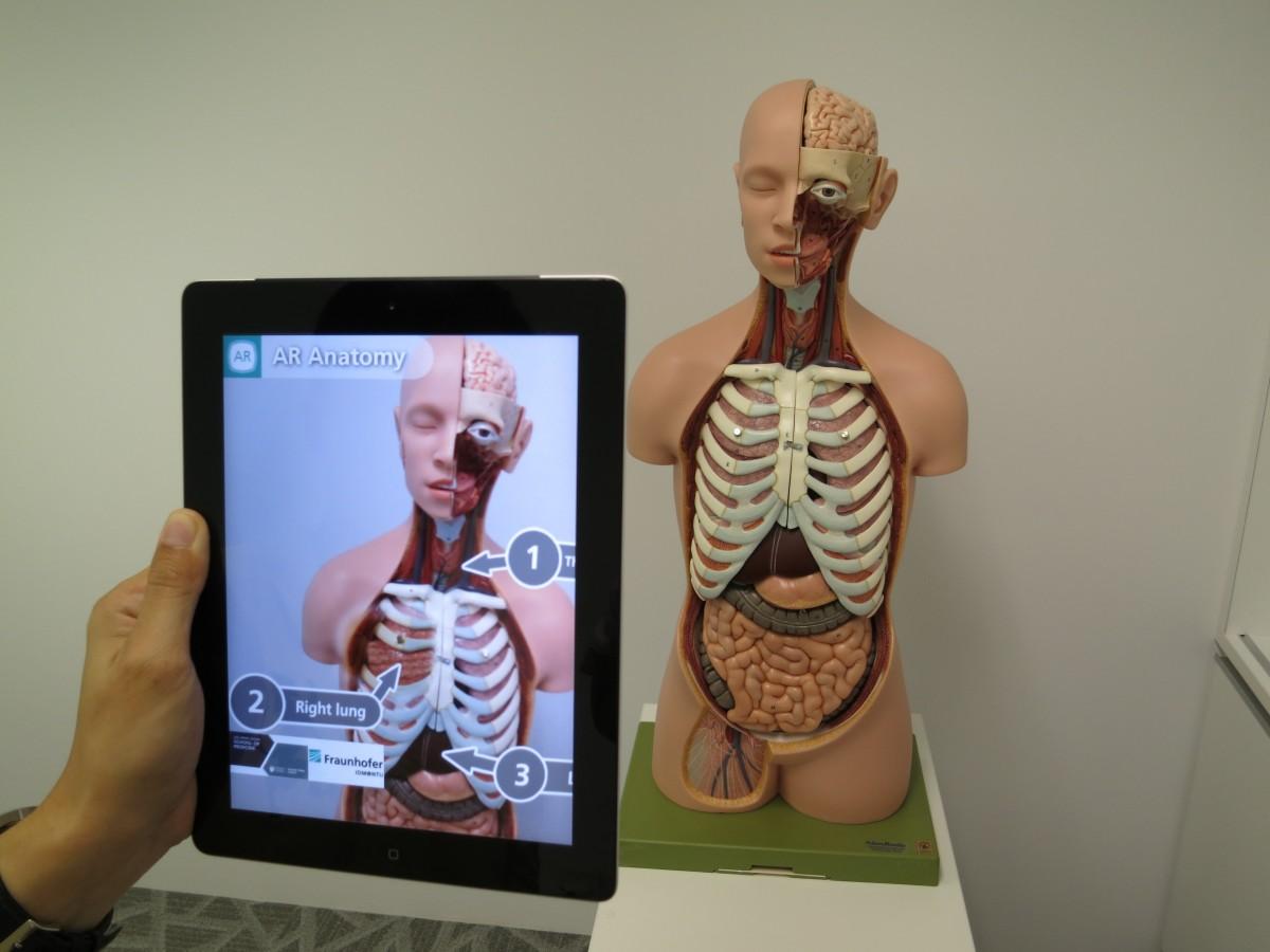 AR-anatomie